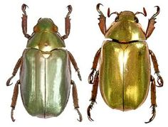 Bugs Bedazzled | Smithsonian Science