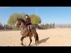 Freier Galopp nur mit Halsring? Schwerste Dressurlektionen ohne Zäumung? Kenzie Dysli erklärt im Video Schritt für Schritt, wie sie mit ihren Pferden trainiert und was zur Doma Vaquera dazugehört