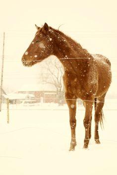 Winter Grazing - Hometown Girl