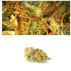 UK Cheese is a popularhybridstrain known for its potent balanced effects and signature mustycheese smell. The flavor is also unique with notes ofberriesandspicy cheese (one that may just have to be tasted rather than described). This strain is thought to Cannabis Plant, Beyond The Border, British Home, Out Of Body, Cbd Oil For Sale, Hemp Oil, Medical Marijuana, Weed