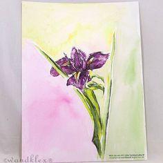 Blumen sind die Entschuldigung der Welt für  ihre Schrecken. . (dieses Bild ist nicht mehr zu haben aber natürlich können Arbeiten nach Wunsch auch bei mir bestellt werden in den Shops wandklex.etsy.com und wandklex.dawanda.com.) .  Material :Schmincke Künstlerfarben Horadam auf @hahnemuehle Britannia matt  @wandklex  Kunstatelier . .  #wandklex #malerei #handgemalt #aquarell #hahnemühle #kunst #art #watercolor  #iris #garden #gardening #blume #garten #stilleben #blumen #flower #florals…