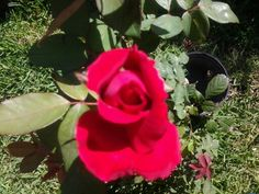 Mi principe, mi jardin