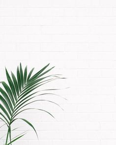 I like this leaf/wall combo. So sue me.  Did you watch my new YouTube video? It's my 5 favourite things about being vegan  Search Plant Based Bride in the YouTube search bar and tell me your favourite things about being vegan in the comments!  Photo from Pinterest  . . . . . #vegansofig #veganlife #thatsdarling #livethelittlethings #thehappynow #pursuepretty #petitejoys #flashesofdelight #mybeautifulmess #wandeleurspark #nothingisordinary #myunicornlife #ABMlifeissweet #prettylittlething…