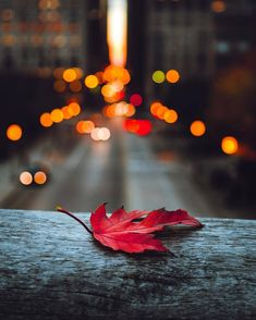 Cars Discover The Bright Side of Life - random/aesthetic - Game& Bokeh Photography Autumn Photography Artistic Photography Creative Photography Amazing Photography Landscape Photography Autumn Aesthetic Aesthetic Photo Pretty Pictures Bokeh Photography, Autumn Photography, Artistic Photography, Creative Photography, Amazing Photography, Landscape Photography, Portrait Photography, Beautiful Nature Wallpaper, Beautiful Landscapes