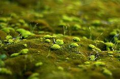 Tiny landscape (color) (by fd)