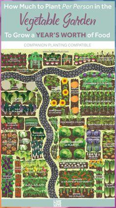 Veg Garden, Edible Garden, Easy Garden, Garden Art, Veggie Gardens, Vegetables Garden, Home Vegetable Garden Design, Vegetable Garden Layouts, Garden Planting Layout