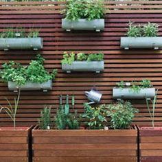 horta orgânica 1