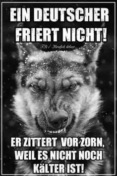 A German doesn& freeze! Valentines Anime, Valentines Day Funny, Word Pictures, Funny Pictures, Satire, Frozen Funny, Dog Signs, Good Jokes, Man Humor