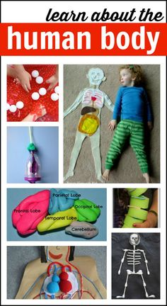 Learn about the human body with these amazing hands-on activities! school, activities for kids, kid fun