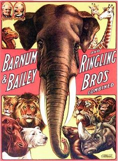 Vintage Barnum & Bailey and Ringling Bros Circus Poster