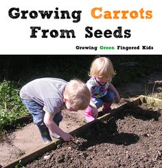 Growing Carrots from Seeds with Kids - Growing Green Fingered Kids