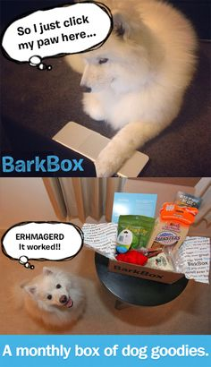 hee hee // Monthly subscription of dog products  Barkbox