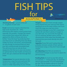 Fish Tips for #aquaponics #gardening #fish #tips