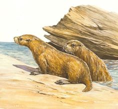 Art illustration - Prehistoric Mammals - Enaliarctos: is an extinct genus of mammals pinnipeds Enaliarctidae family that includes five species of pinnipeds old conocidas. Its fossils have been found in California and Oregon, and date from the Oligocene and Miocene (ca. 24-22 million years).