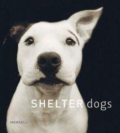Traer Scott / Shelter Dogs