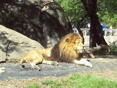 Although I haven't been since I was a kid, the zoo holds a special place in my memories. Houston Zoo, Galveston Island, Clear Lake, Take A Nap, Lake City, Great Places, Travel Guide, Kid, Memories
