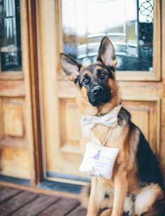 Reception Formal Party Cool German Shepherd Dog Skinny Tie for Wedding Men Date Gift Suit Necktie