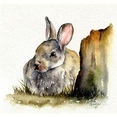 Gilliam McMurray-Rabbit sketch in watercolour. Love!