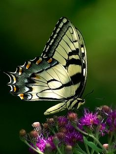 I saw a butterfly like this the day my Mammaw passed. Now I think of her every time I see one... Miss her...