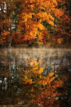 Fall / reflection on water