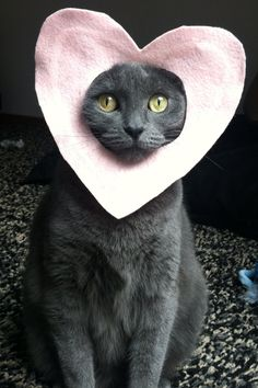 Russian Blue cat, Valentine's Day, Valentine, pink felt, adorable