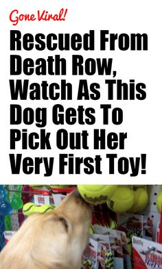 This brought tears to my eyes! http://iheartdogs.com/rescued-from-death-row-watch-as-this-dog-gets-to-pick-out-her-very-first-toy/