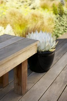 potted plants and wood benches