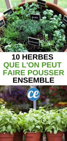 Racines et pousses Flock Grass /& Effet Pierre Décoration De Jardin-Bleu