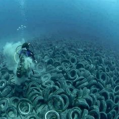 Approximately two million old car tire's are on the ocean floor off Fort Lauderdale in the US, dumped in the with the intent of creating an artificial reef. The tires are now scouring the ocean floor and wedging against the natural reef, killing coral. Fort Lauderdale, Salve A Terra, Ocean Pollution, Plastic Pollution, Pollution Environment, Green Environment, Save Our Earth, Save Our Oceans, Marine Biology