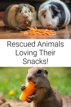 Snack-time with some lucky rescues living at animal sanctuaries! ... #sanctuaries #rescueanimals #animals #animalsanctuary #snacks #lucky Vegan Animals, Farm Animals, Cute Animals, Sleep Quotes, Cat Quotes, Cute Animal Pictures, Vegan Lifestyle, Funny Babies, Funny Cute