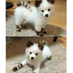 #Dogs with #Amazingly #Unique #Markings - #HalfDog + #HalfZebra? = 100% #Fabulous  #CutePuppy #LittleDogs #BlackandWhite #Stripes #AdorableAnimals #ooak