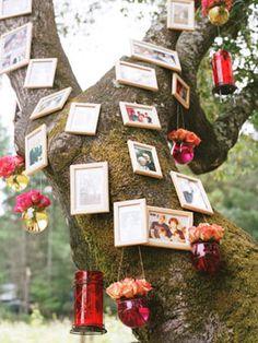 use a tree as a photo wall