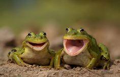 Dois sapinhos felizes :)