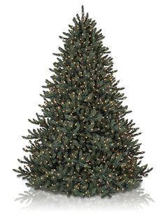 the blue spruce artificial christmas tree from balsam hill is made with quality materials for the highest level of realism - Big Lots Christmas Trees