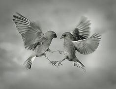 Aero Tango by Mikesi
