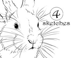 4 Bunny Rabbit Drawings / Sketches Clip Art DIY by StarglowStudio, $5.00