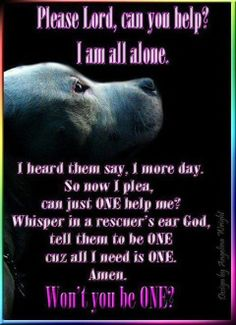 Pitbull prayer be that one person that will change their mind that's all it takes it shouldn't never be one more day please adopt rescue or foster we got to save lives not to end lives stand up and keep fighting for all these. Dogs and cats we got to get to this finish line and get victory for all these dogs and cats we cannot stop fighting for them they need are voice always Don't shop adopt rescue or foster please
