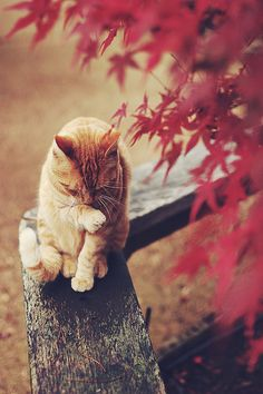 My two favorite things, cats and autumn leaves!