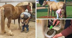Thrush is a common condition in horses. Find out how to care for it in your horse or pony and when to call the farrier