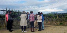 Los cinco periodistas estadounidenses recorriendo viñedos y bodegas de la subzona de Condado do Tea de la D.O. Rías Baixas.