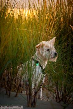 Ein kleiner Hund beobachtet etwas in der Ferne. A small dog watching something in the distance.