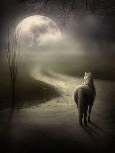 The haunted moon beckons to the solitary Night Mare...