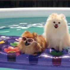 pom poms floating in swimming pool <3
