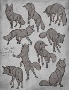 Poses de Coyote