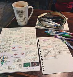 tanya's studyblr — juliebunny-study: 22/01/2017 Studying for my...
