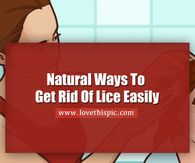 Natural Ways To Get Rid Of Lice Easily