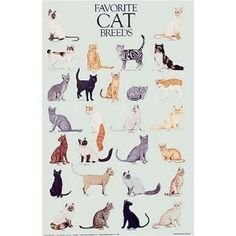 Favorite Cat Breeds Poster (Posters)