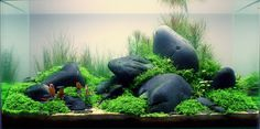 Sensational Green And Grey Stone Decoration Aquascaping Designs For Inspiration To Your Aquarium In House Aquascaping, Aquarium Aquascape, Betta Aquarium, Planted Aquarium, Aquarium Terrarium, Aquarium Landscape, Nature Aquarium, Betta Fish, Betta Tank