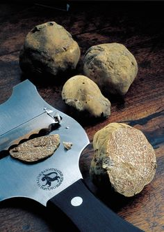 The most important tipology of the Truffles is divided in White and Black. White Truffle is the one we usually find in Piedmont (near Alba) and in Tuscany between San Miniato and Montaione, it is more precious than the Black one