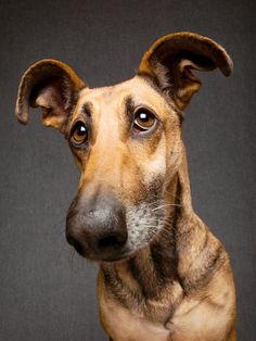 Are you absolutely sure? by Elke Vogelsang on 500px